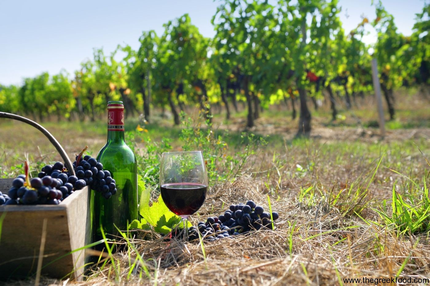 Greek wines: from the land of Dionysus, the wine god